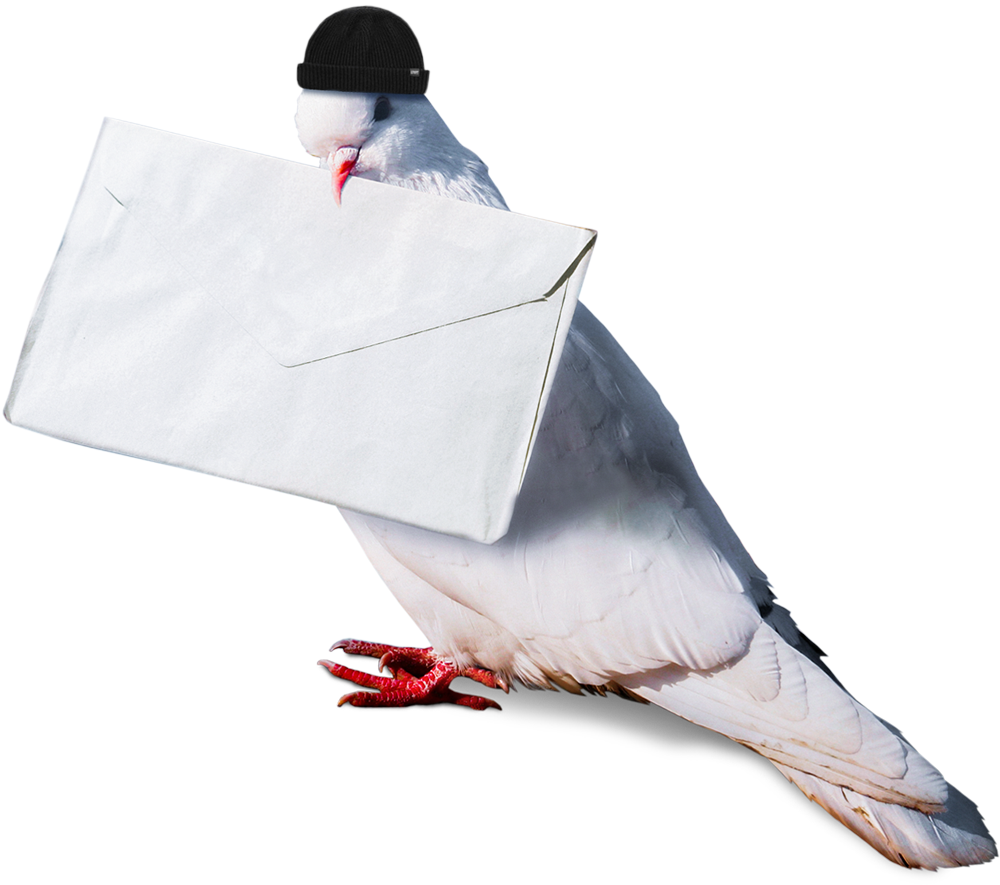 Carrier Pigeon wearing Beanie Hat